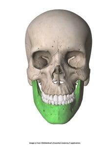 Os mandibulae