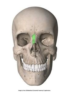 Os nasale