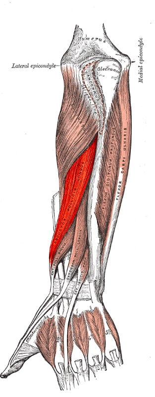 Abductor pollicis longus